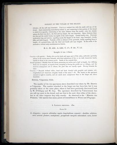 Image of Darwin-F8.3-1838-00052