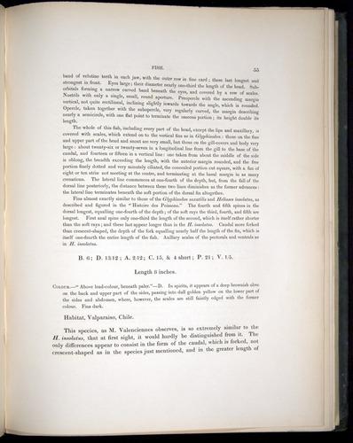 Image of Darwin-F8.3-1838-00055
