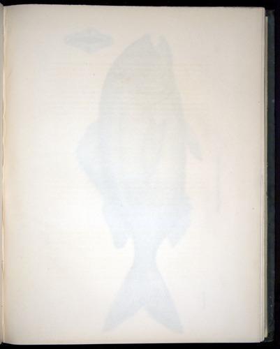 Image of Darwin-F8.3-1838-00056-af12