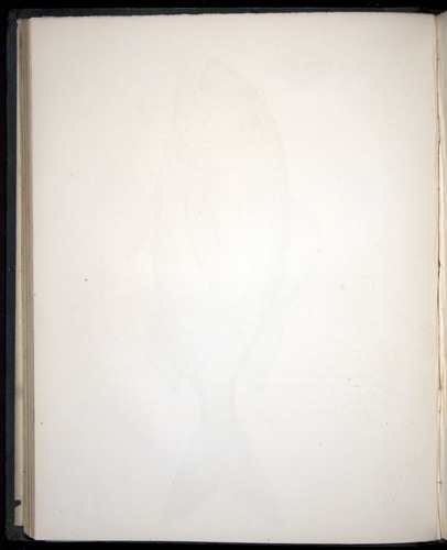 Image of Darwin-F8.3-1838-00056-zf12