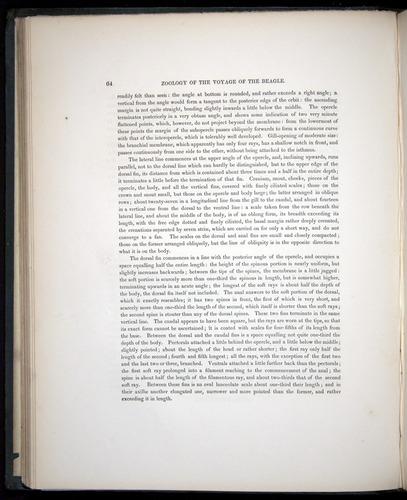 Image of Darwin-F8.3-1838-00064