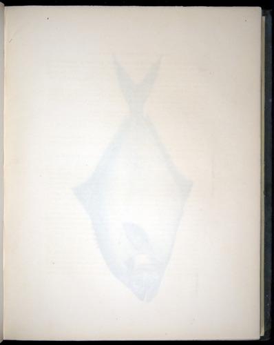Image of Darwin-F8.3-1838-00066-af13