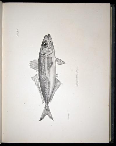Image of Darwin-F8.3-1838-00068-ayf14