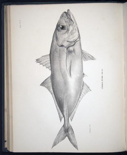 Image of Darwin-F8.3-1838-00068-bbf15