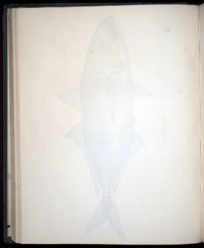 Image of Darwin-F8.3-1838-00068-bzf15