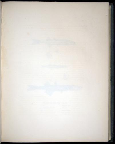 Image of Darwin-F8.3-1838-00078-af16