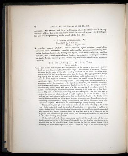 Image of Darwin-F8.3-1838-00078