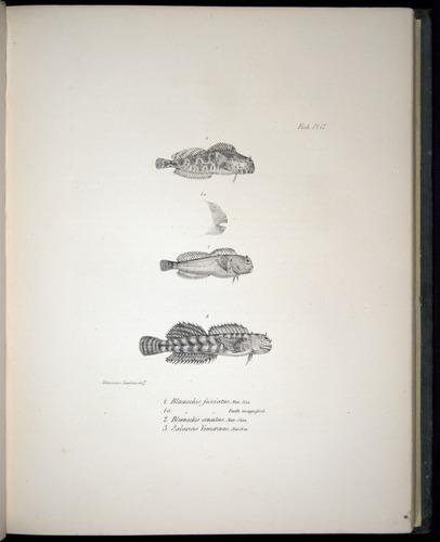 Image of Darwin-F8.3-1838-00084-cf17
