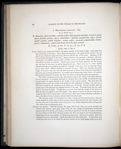 Image of Darwin-F8.3-1838-00084