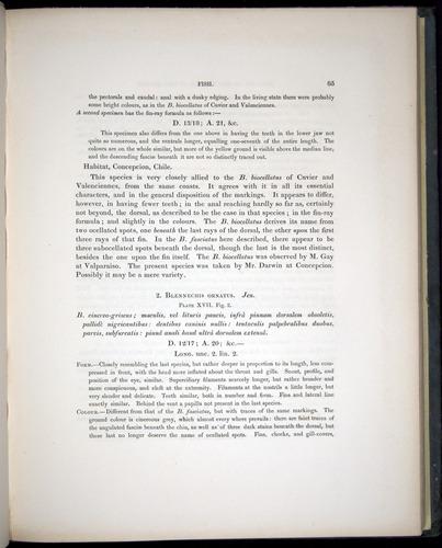 Image of Darwin-F8.3-1838-00085