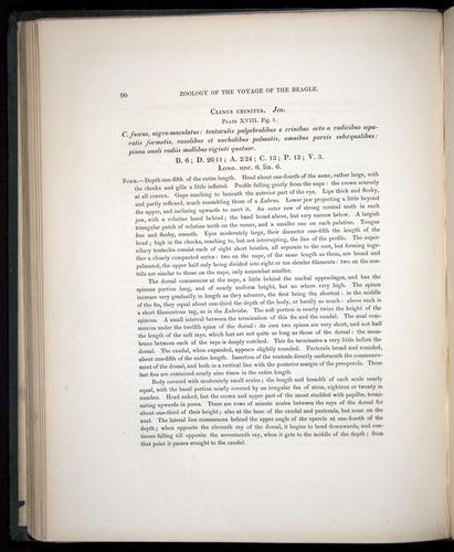 Image of Darwin-F8.3-1838-00090