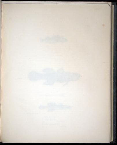 Image of Darwin-F8.3-1838-00094-af19