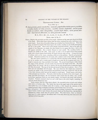 Image of Darwin-F8.3-1838-00094