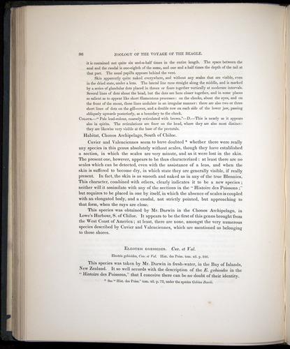 Image of Darwin-F8.3-1838-00098