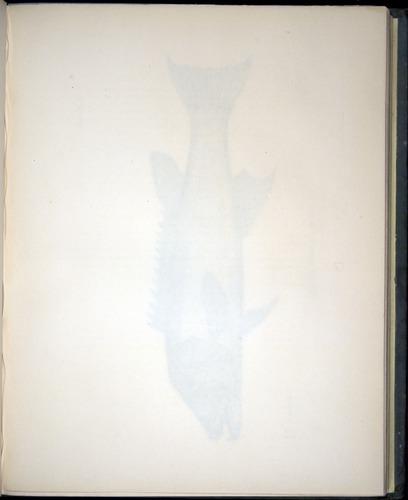 Image of Darwin-F8.3-1838-00100-af20