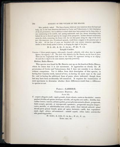 Image of Darwin-F8.3-1838-00100