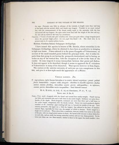 Image of Darwin-F8.3-1838-00102
