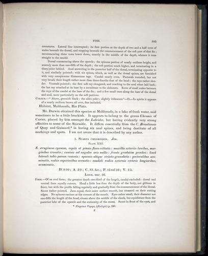 Image of Darwin-F8.3-1838-00105