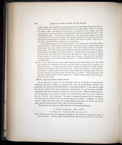 Image of Darwin-F8.3-1838-00106