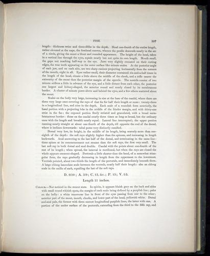 Image of Darwin-F8.3-1838-00107