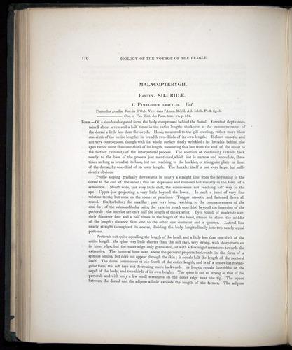 Image of Darwin-F8.3-1838-00110