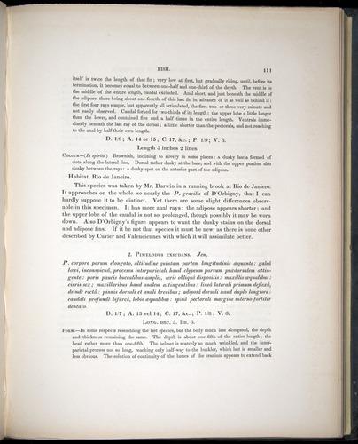 Image of Darwin-F8.3-1838-00111