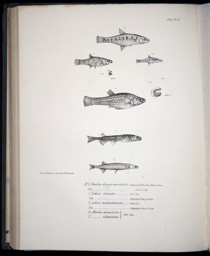 Image of Darwin-F8.3-1838-00114-bf22