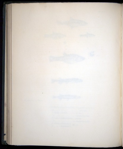 Image of Darwin-F8.3-1838-00114-zf22