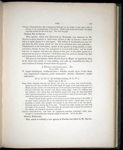 Image of Darwin-F8.3-1838-00115