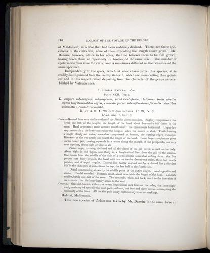 Image of Darwin-F8.3-1838-00116