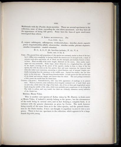 Image of Darwin-F8.3-1838-00117