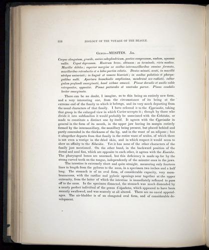 Image of Darwin-F8.3-1838-00118