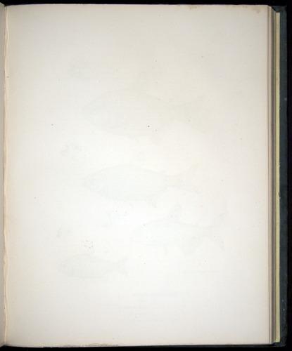 Image of Darwin-F8.3-1838-00122-af23