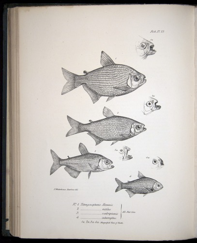 Image of Darwin-F8.3-1838-00122-bf23