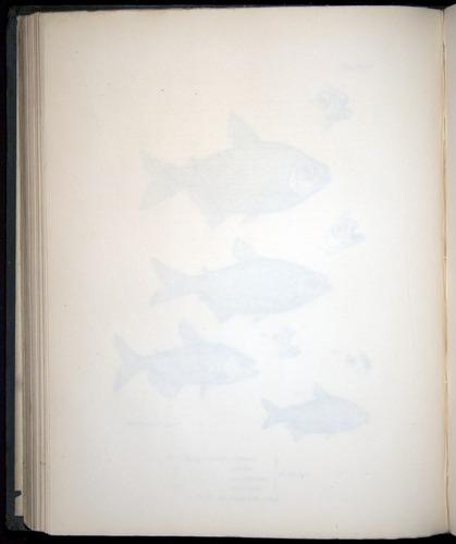 Image of Darwin-F8.3-1838-00122-zf23