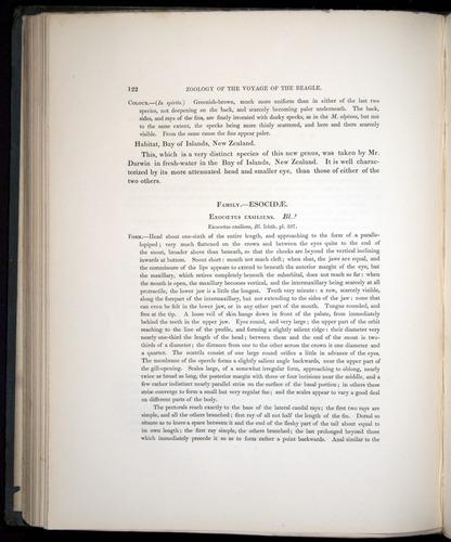 Image of Darwin-F8.3-1838-00122
