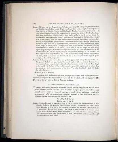 Image of Darwin-F8.3-1838-00126