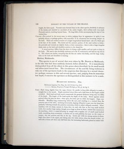 Image of Darwin-F8.3-1838-00128