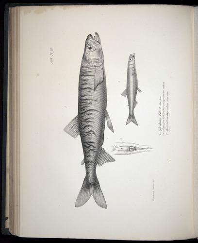 Image of Darwin-F8.3-1838-00130-bf24