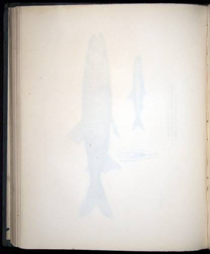 Image of Darwin-F8.3-1838-00130-zf24