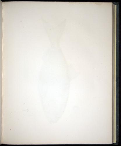 Image of Darwin-F8.3-1838-00134-af25