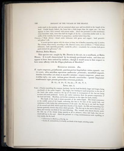 Image of Darwin-F8.3-1838-00136