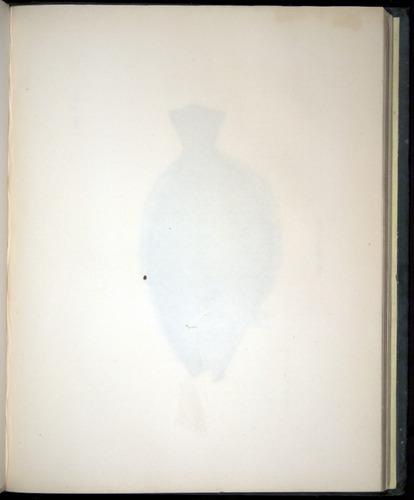 Image of Darwin-F8.3-1838-00138-af26
