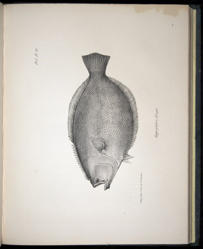 Image of Darwin-F8.3-1838-00138-yf26