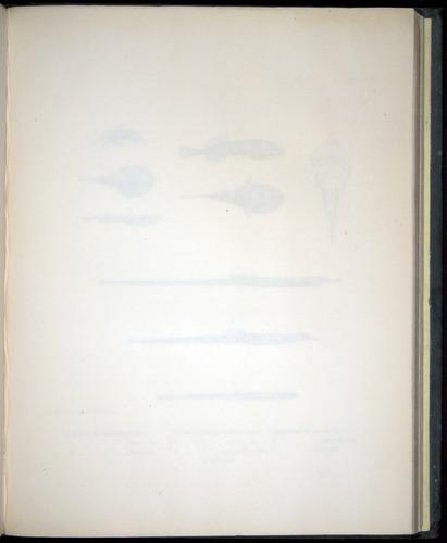 Image of Darwin-F8.3-1838-00140-af27