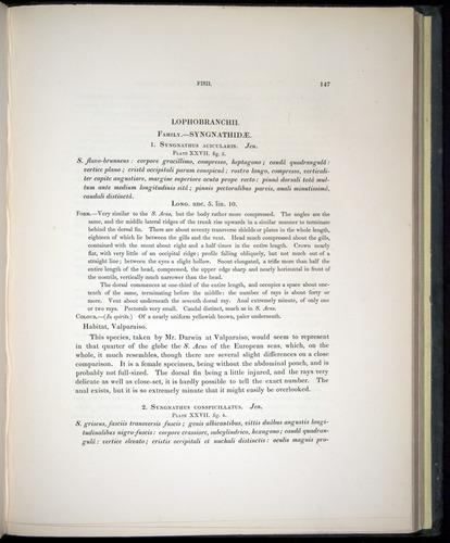 Image of Darwin-F8.3-1838-00147
