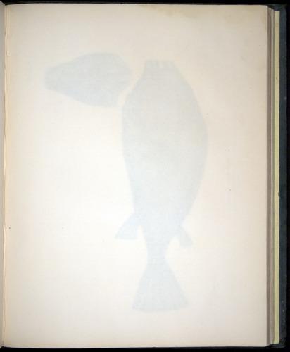 Image of Darwin-F8.3-1838-00154-af28