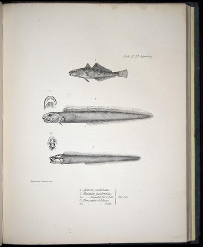 Image of Darwin-F8.3-1838-00160-cf29