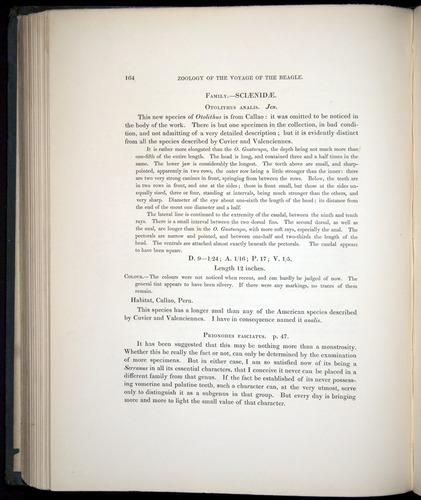 Image of Darwin-F8.3-1838-00164