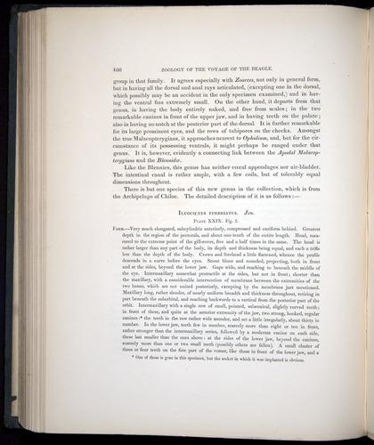 Image of Darwin-F8.3-1838-00166